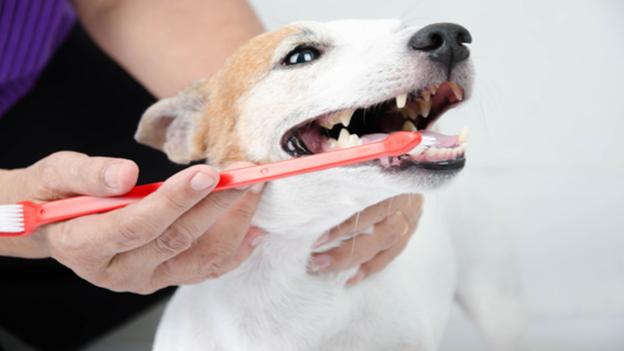 dog dental hygiene tips from university place veterinary hospital in washington